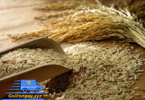 hạt gạo qua máy xay sát
