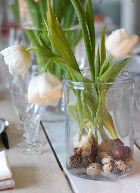 Gorgeous tulip bulbs in vase on farmhouse table