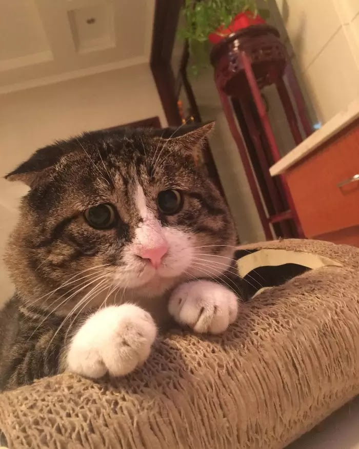 Hilarious Pictures Of An Adorably Dramatic Cat
