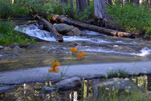 wide creek flowing behind tiger lilies