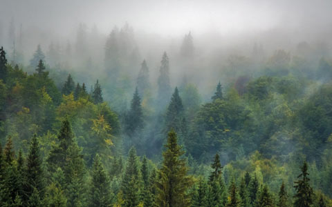 Forest trees are carbon sinks fighting global warming and climate change