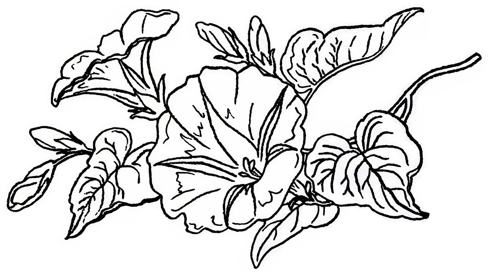 Lilac Amp Lavender Morning Glory Clip Art Amp Printable