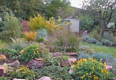 pflanzen in nanopics steingarten mit typischen pflanzen und gr sern. Black Bedroom Furniture Sets. Home Design Ideas