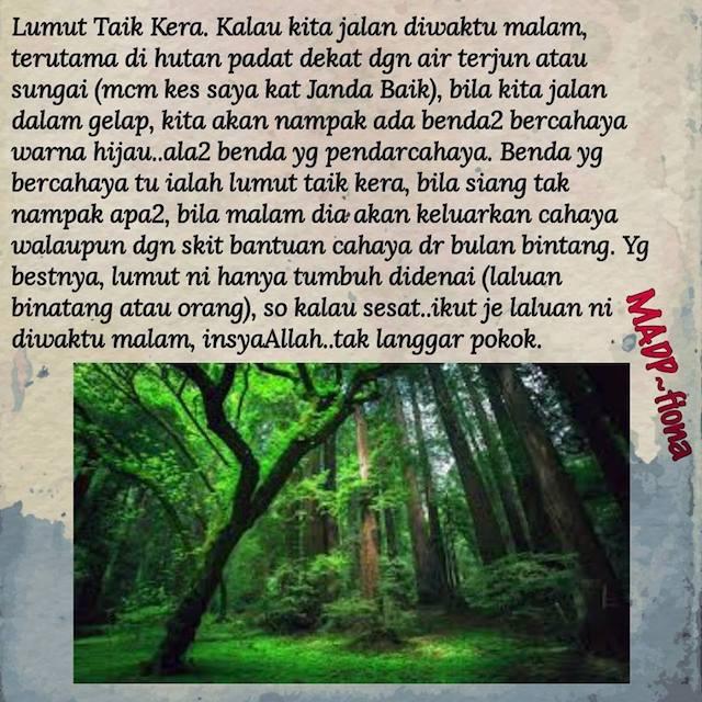 12 Tips Penting Jika Masuk Atau Bermalam Di Hutan