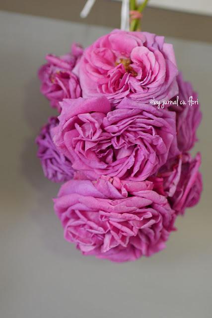trandafiri roz de gradina pusi la uscat