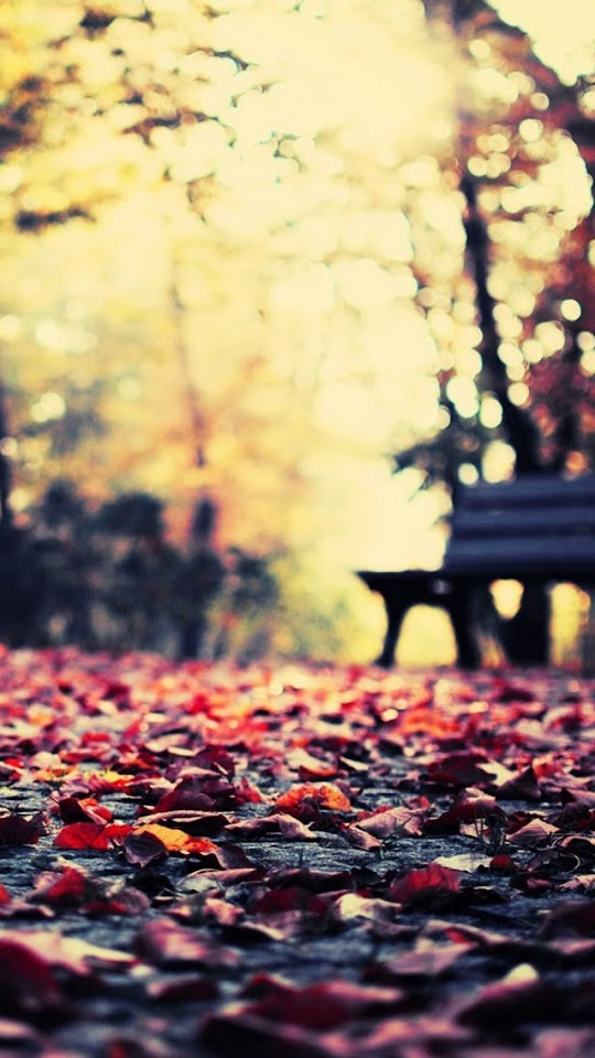 Autumn Leaves Park Bench  Galaxy Note HD Wallpaper