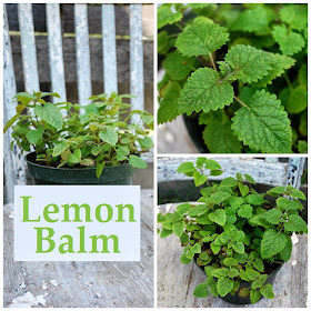 How to use lemon balm