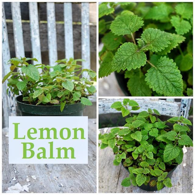 How to use lemon balm