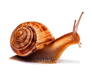 6 Jenis, Ciri dan Kelompok Hewan tidak Bertulang Belakang dan Mahluk Mikroskopis