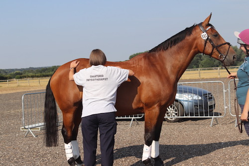 equine physiotherapist evaluating horse