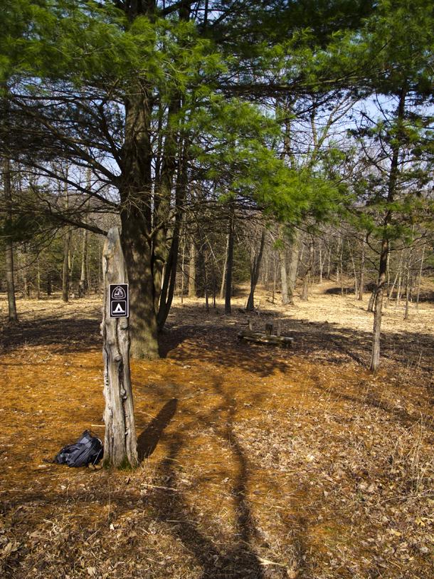 campsite beneath a pine tree
