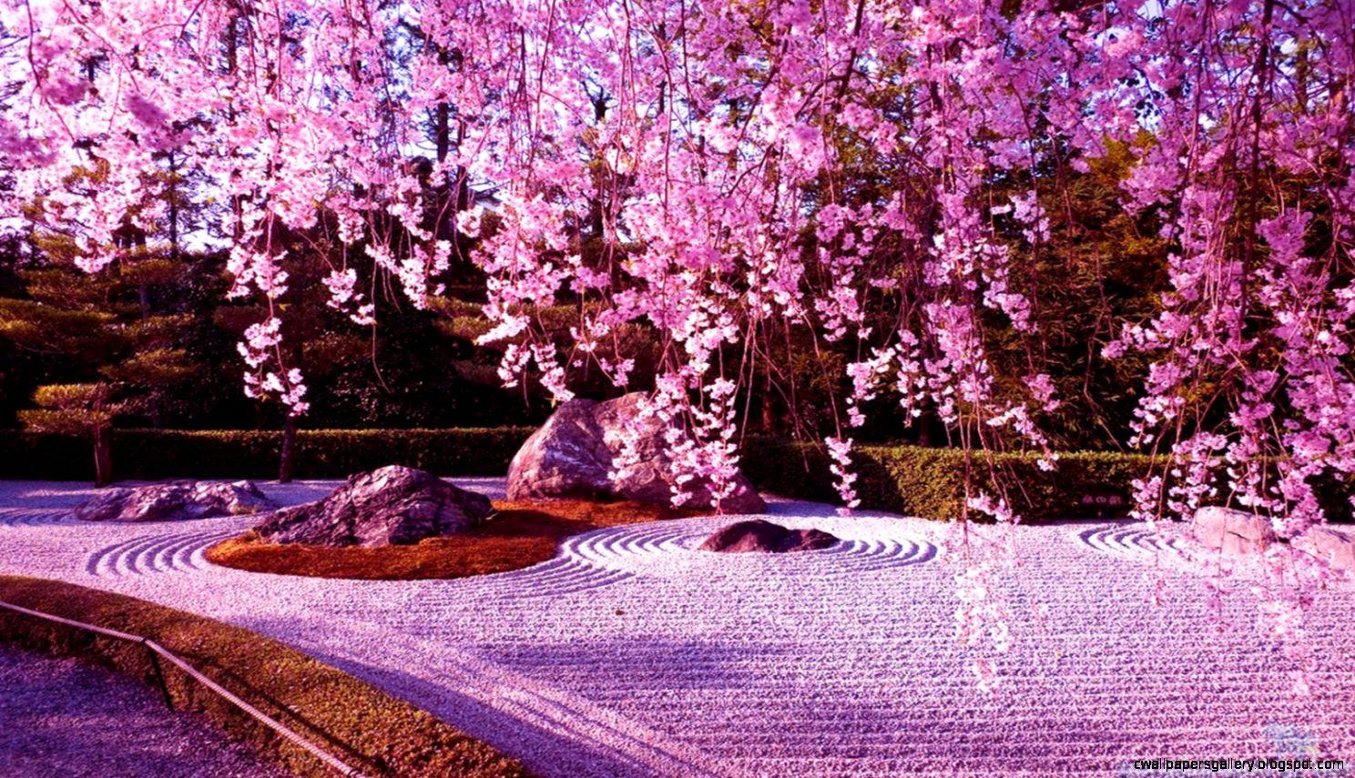 Japanese Cherry Blossom Garden Wallpaper   Wallpapers Gallery