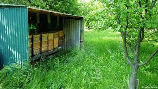Alemania y el auge de la apicultura urbana 7