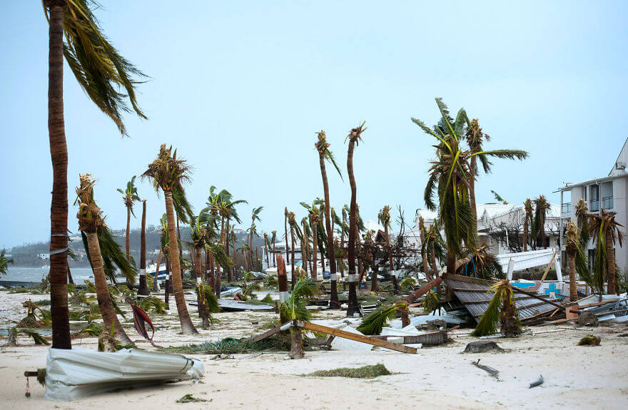 30 Shocking Pictures That Show How Catastrophic Hurricane Irma Is - Broken Palm Trees On The Beach Of The Hotel Mercure In Marigot, Saint Martin