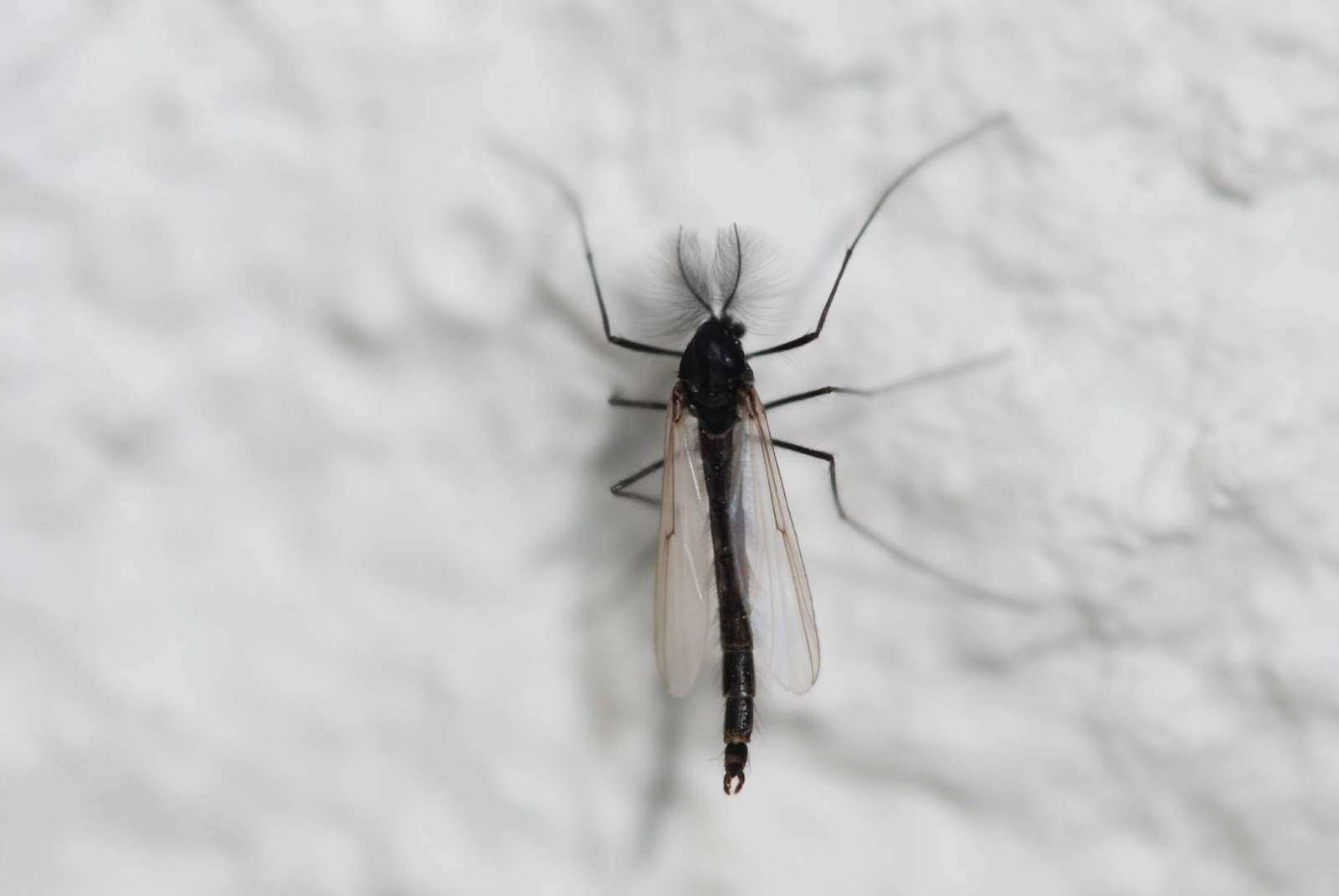 Black flies and midges are out now