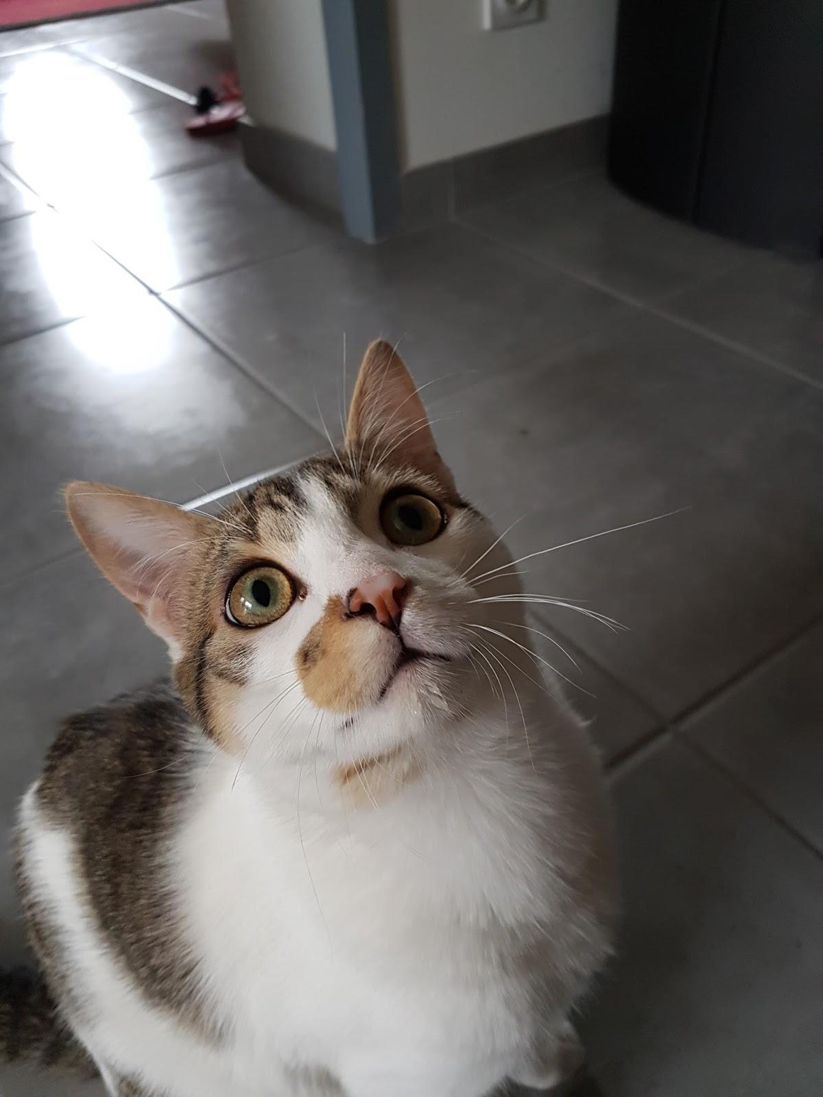 Photos de la queue noire dans la chatte blanche