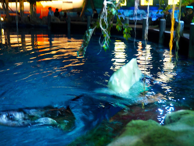 Rays in Shark Mystique, Ocean Park, Hong Kong