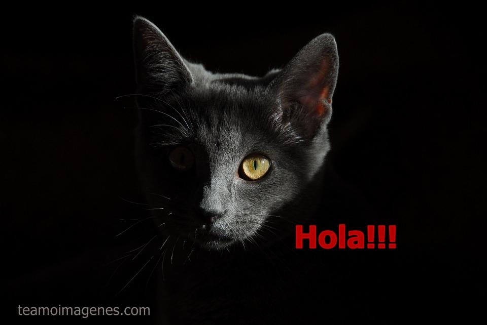 Las mejores imagenes de gatos lindos con frases de amor, teamoimagenes.com
