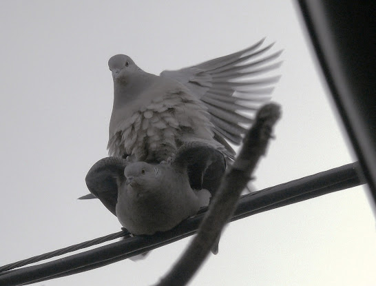 Birds Have Sex 28
