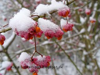 rosa Blüten im Frost: Foto von unabhängiger Stampin' Up! Demonstratorin Susanne McDonald/ Coburg