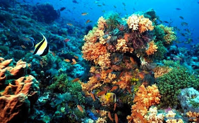 Cuidados constantes al preciado coral