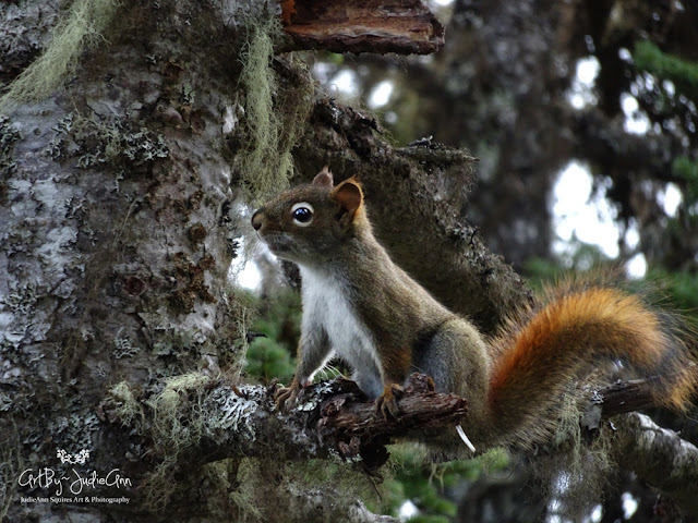 Woodland Squirrel