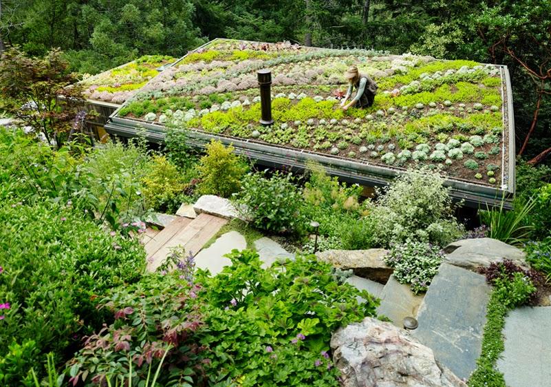 Arquitetando Ideias Cabana Em Madeira Com Telhado Verde