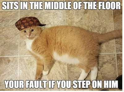 Cute Cats · funny · funny cute meems · funny Cats memes · funny cats · funny cute · cats cute