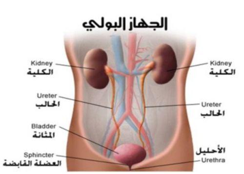 الجهاز البولي