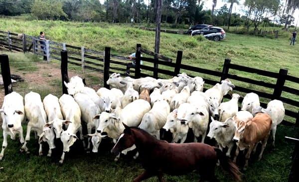 Homem de Major Vieira é preso suspeito de tentar roubar gado em propriedade rural