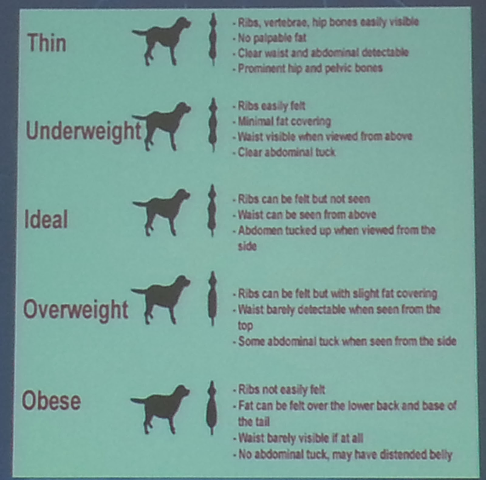 If You Are Wondering If Your Dog Is A Healthy Weight, Please Look At This  Chart And Compare Your Dog With The Pictures On The Chart.