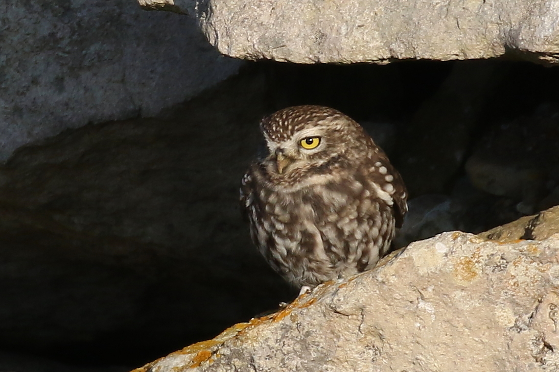 owl   Oregon Zoo  Owls Portland Oregon
