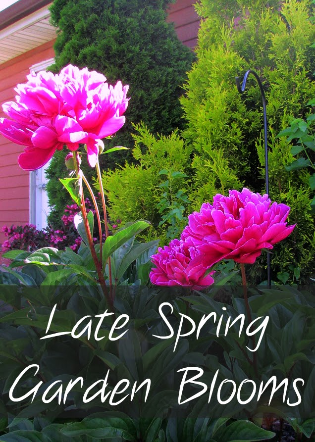 Late Spring Garden Flowers Rustic Refined