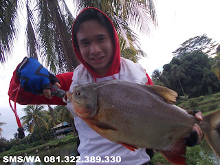 Essen Ikan Bawal