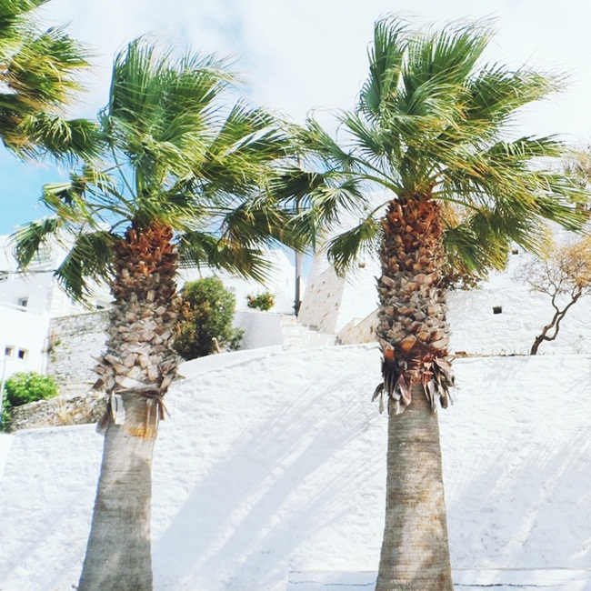 Palms in the port of Paros