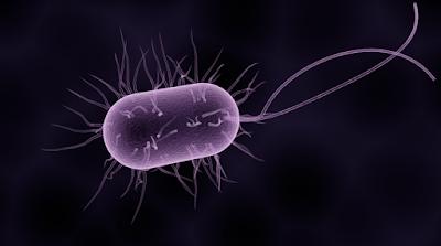 Macam-Macam Penggolongan Bakteri beserta Contohnya