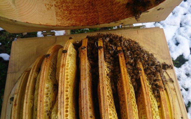 ringe og omegns biavlerforening
