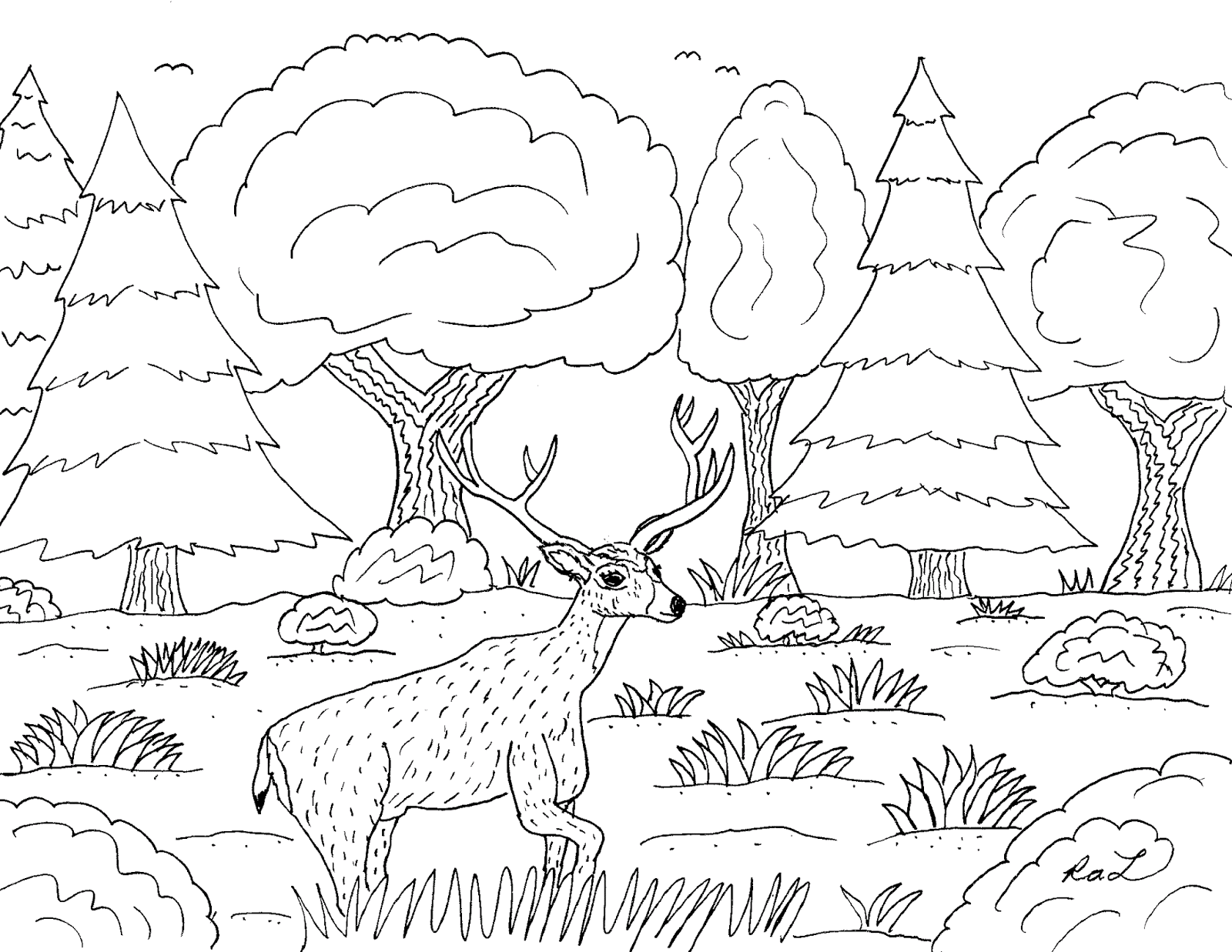 Robin\'s Great Coloring Pages: Deer Family of North America