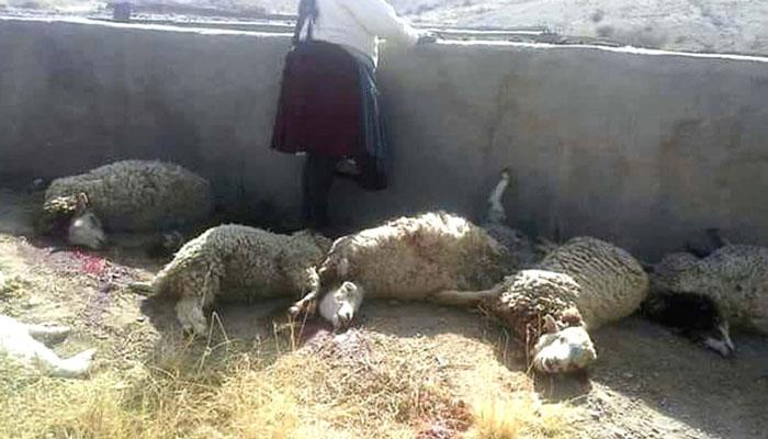 Ataques de perros vagabundos en Abra Pampa y Villazón