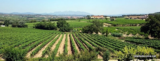 Un matí entre vinyes i presseguers a Subirats.