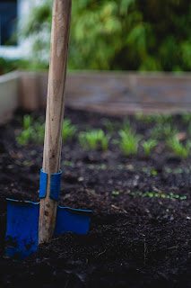 A blue shovel in rich black soil with bright green plants sprouting in the background.Photo by Markus Spiske