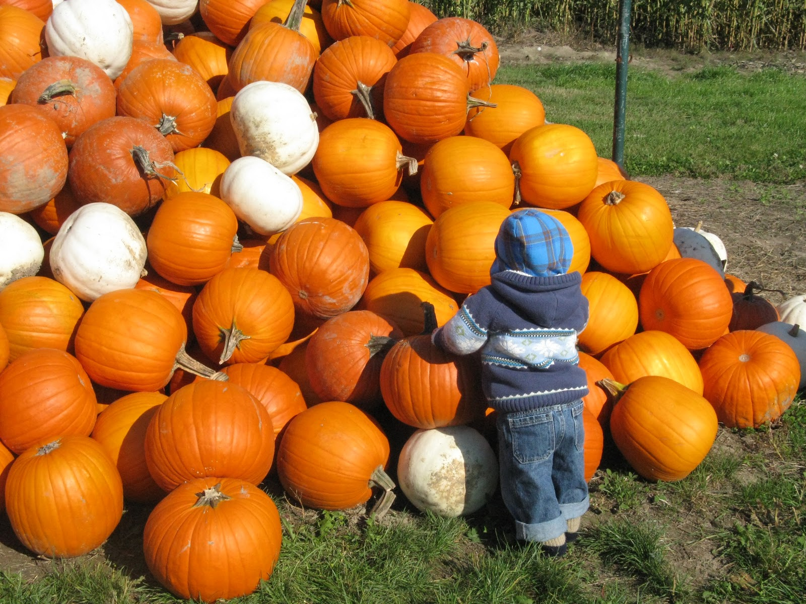 The Pumpkin Patch and Carving Ideas - The Best of this Life