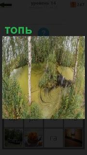 Небольшая трясина, топь зеленого ядовитого цвета, в середине коряга торчит