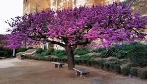 Arboles Para Jardines Pequeños