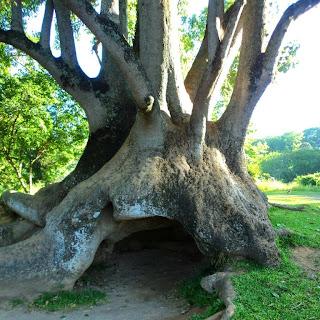 Caverna no Tronco da Árvore, Caminhos de Pedra