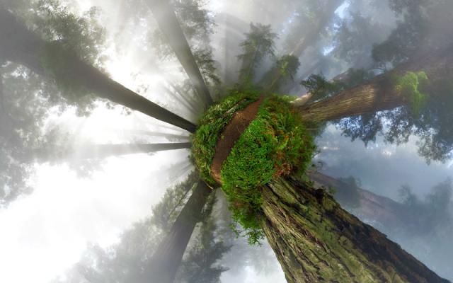 najljepse drvece šume