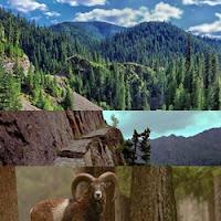 Floresta densa de montanhas onde vivem os muflões montanheses