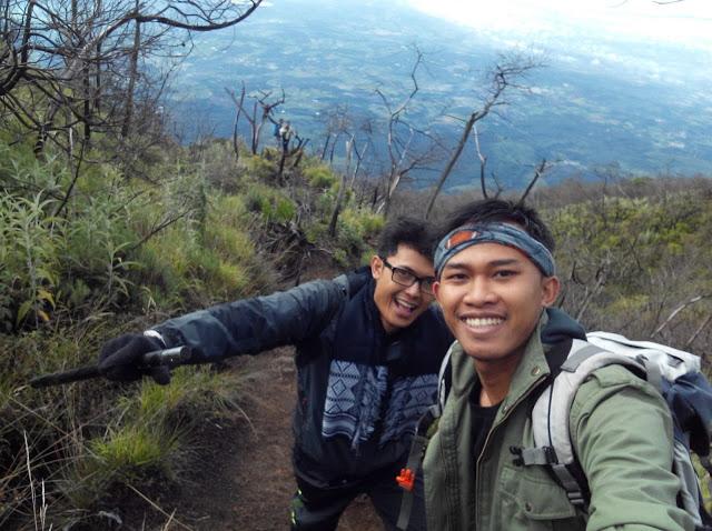 Edelwais Mt Ciremai
