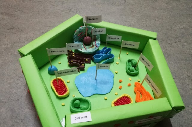 DIY: Plant Cell Model Project