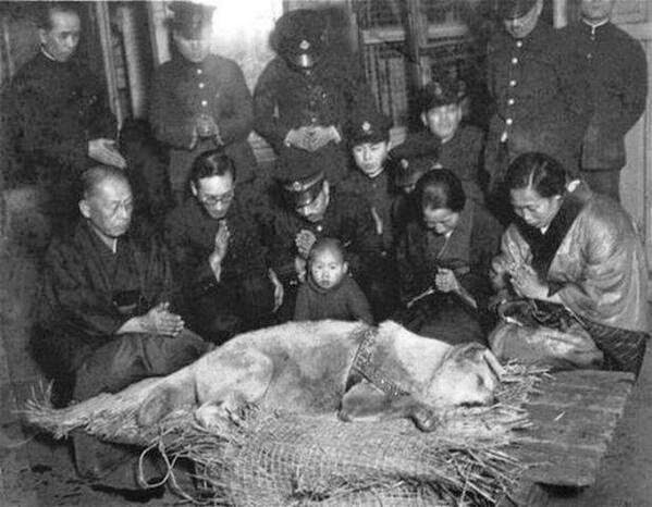 64 Historical Pictures you most likely haven't seen before. # 8 is a bit disturbing! - Hachikō before his burial